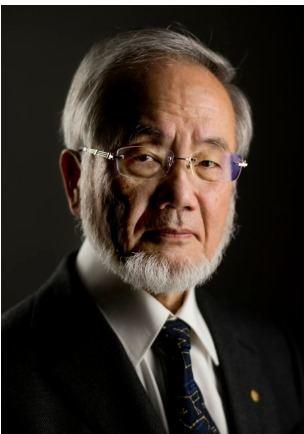 Yoshinori Ohsumi Nobelisti 2016